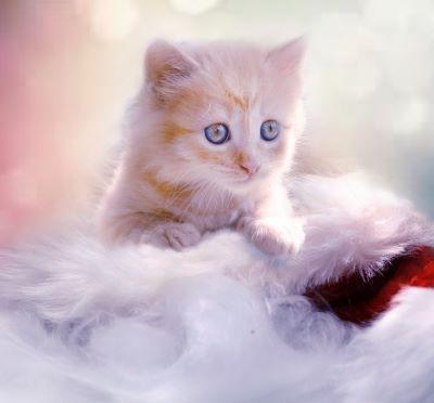 23 March Cuddly Kitten Day