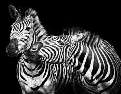 3 March World Wildlife day